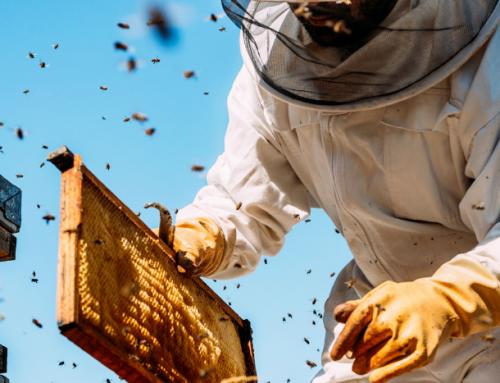 Γιατί Βιολογική Μελισσοκομία;