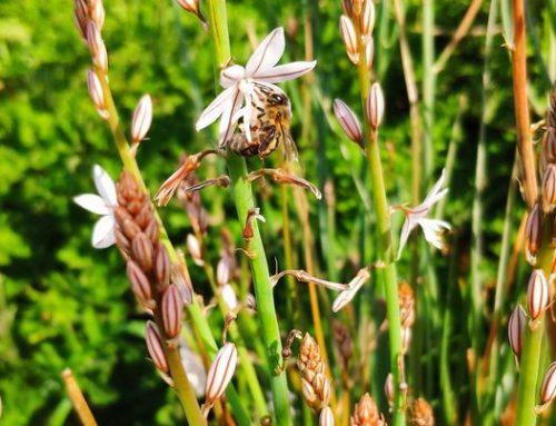 Η οργάνωση των μελισσών